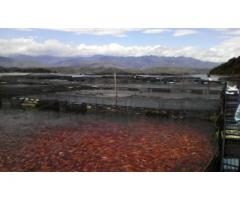 asesoria en piscicultura,asesoria piscicola