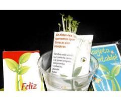 Tarjeta de abundancia que germina en agua