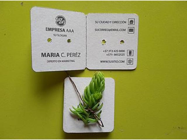 Suculenta en tarjeta personalizada con cordón en fibra natural